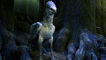 LIVE - Harry Potter : et si on visitait la Forêt Interdite ensemble ?