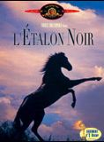 L'Etalon noir streaming