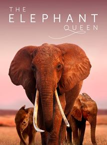 The Elephant Queen streaming