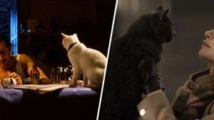 Elle : les adaptations de Philippe Djian au cinéma