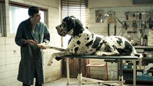 Dogman : retour sur le terrifiant fait divers à l