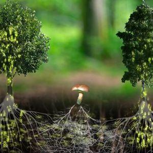 """Résultat de recherche d'images pour """"allocine intelligence arbres"""""""