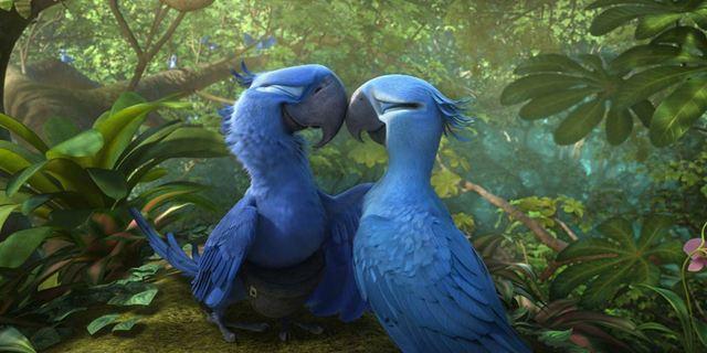 Rio : les perroquets du film font désormais partie des espèces disparues