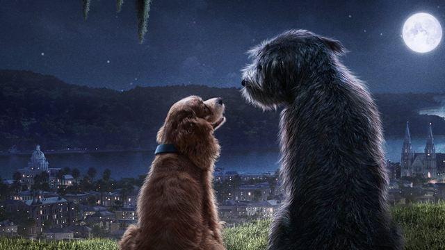 La Belle et le Clochard (Disney+) : la belle histoire derrière le casting du couple de chiens star