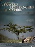 A travers les branches d&#39;un arbre