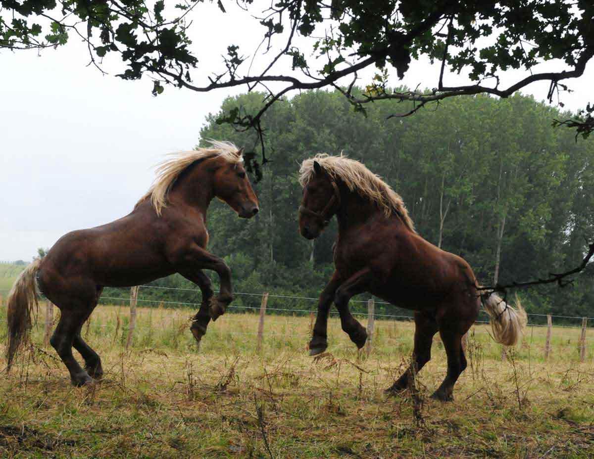 Extrêmement Photo du film La Vie sauvage des animaux domestiques - Photo 3 sur  WD84