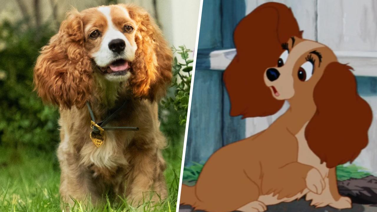 La Belle et le Clochard (Disney+) : la comparaison entre le film et le dessin animé