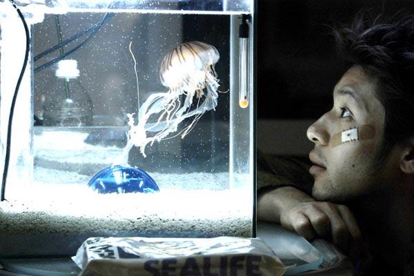 Jellyfish : photo