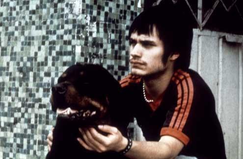 Amours chiennes : Photo Gael García Bernal
