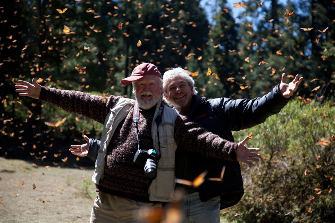 Pollen : Photo Louie Schwartzberg