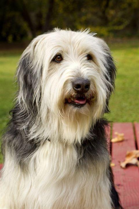 Un amour de chien : Photo