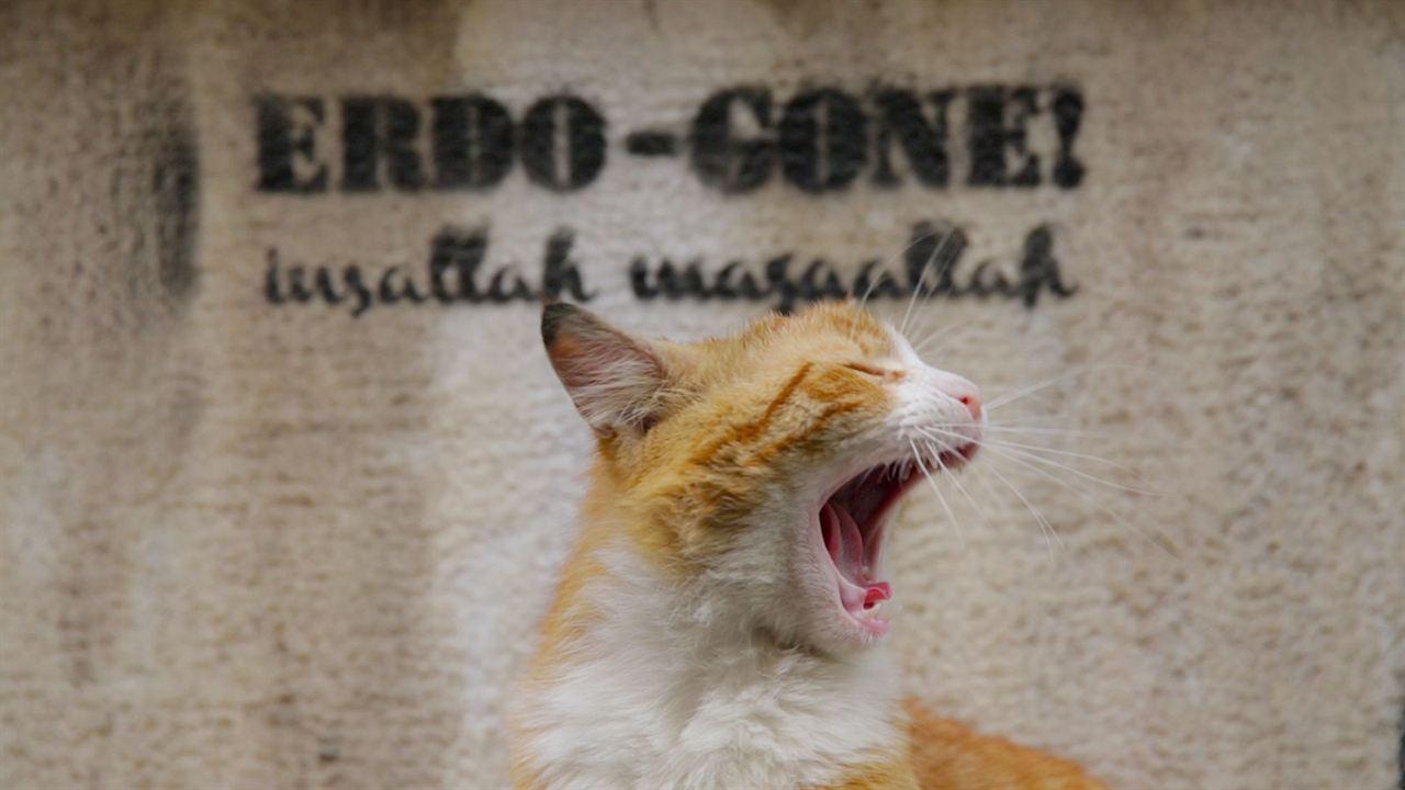 Kedi - Des chats et des hommes : Photo