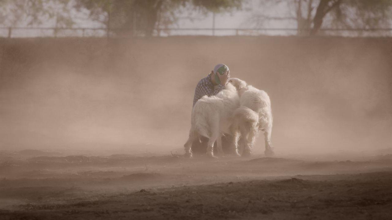 Tout est possible (The biggest little farm) : Photo