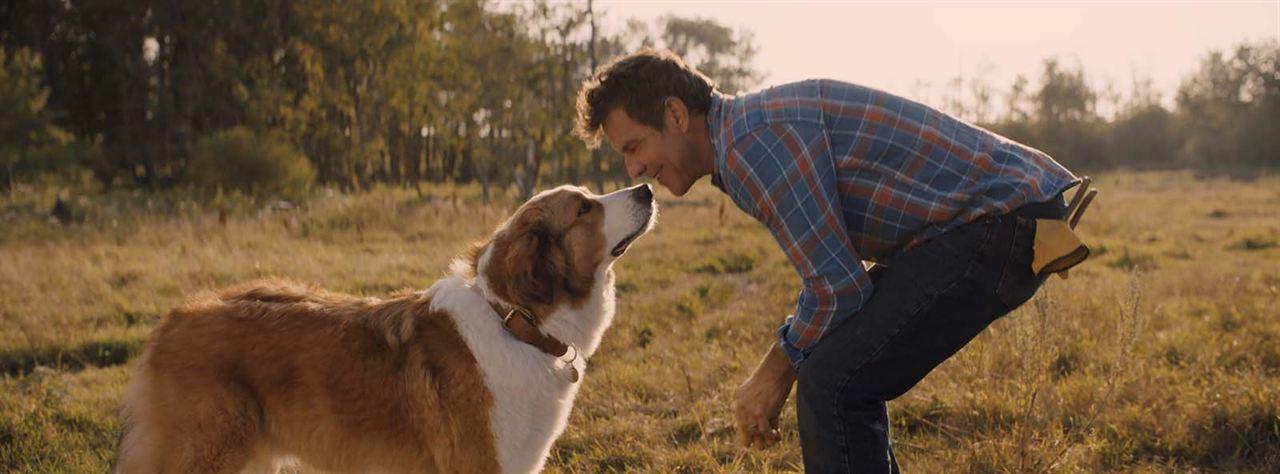 Mes autres vies de chien : Photo Dennis Quaid