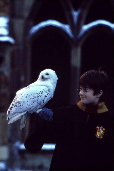 Harry potter à l école des sorciers photo daniel radcliffe