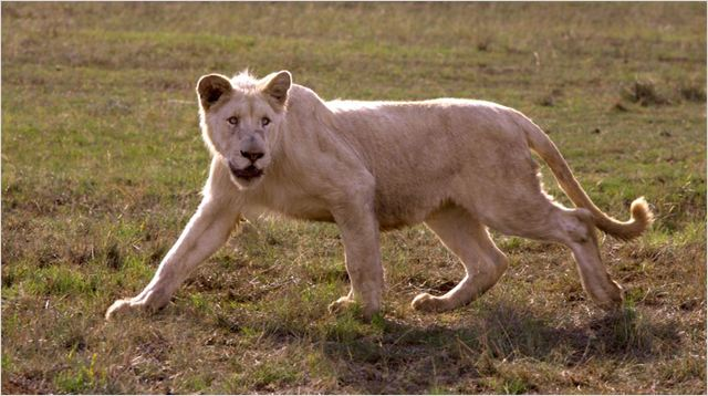 White Lion : photo