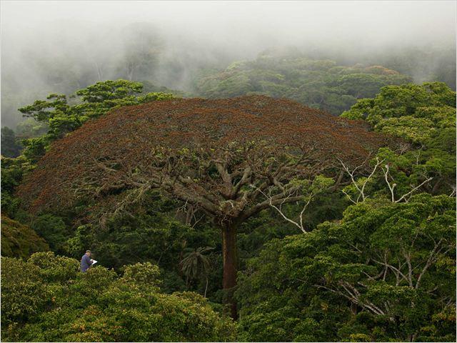 Il était une forêt : Photo