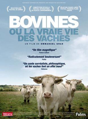 Bande-annonce Bovines