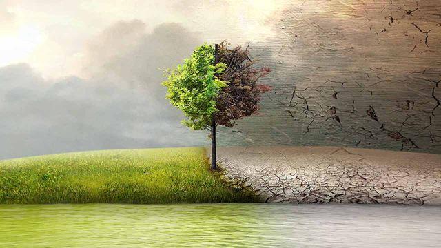 Avant la COP25, 5 films pour réveiller votre conscience écolo
