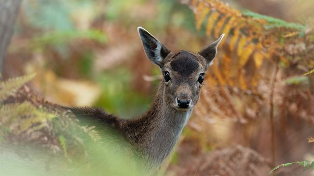 Bambi : une nouvelle adaptation live par un réalisateur français