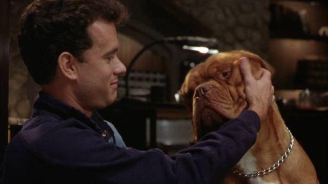 Disney+ : 7 films d'amitié avec les animaux pour toute la famille
