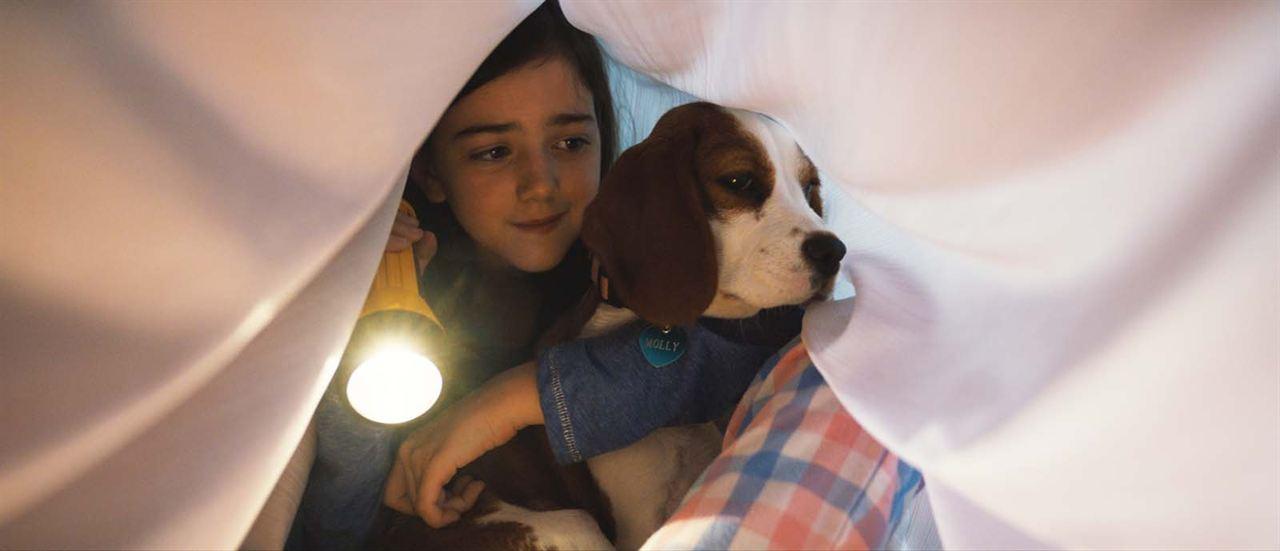 mes autres vies de chien au cin ma libourne grand ecran. Black Bedroom Furniture Sets. Home Design Ideas