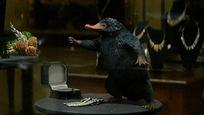 Les Animaux fantastiques sur TF1 : niffleur, botruc, demiguise... quelles sont ces nouvelles créatures ?